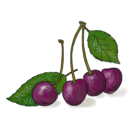 Black Cherry Png Black cherryBlack Cherry Png